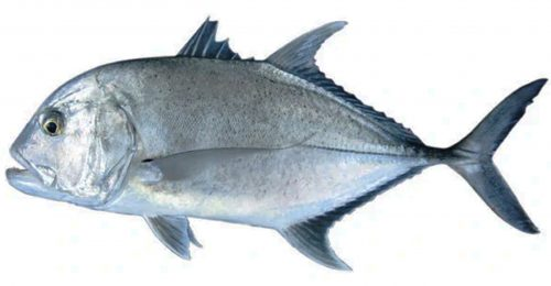 Giant-trevally - Photo: Fandom